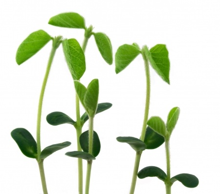 Stems of a plant